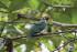 ptaci5