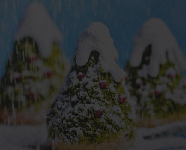 pistaciove-vanocni-stromecky